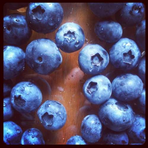blueberries blueberry