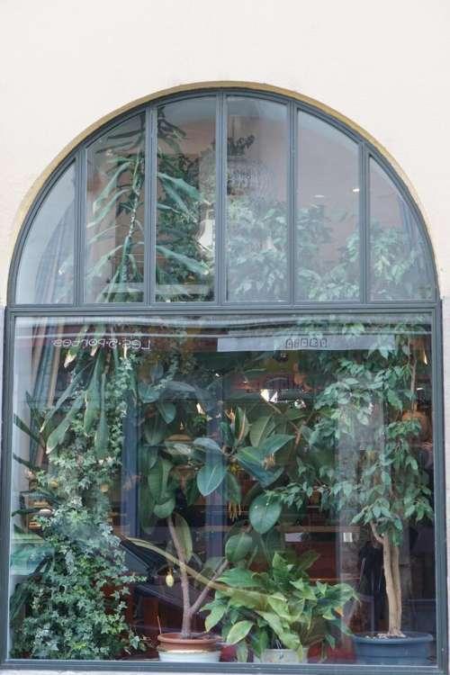 window plants geneva