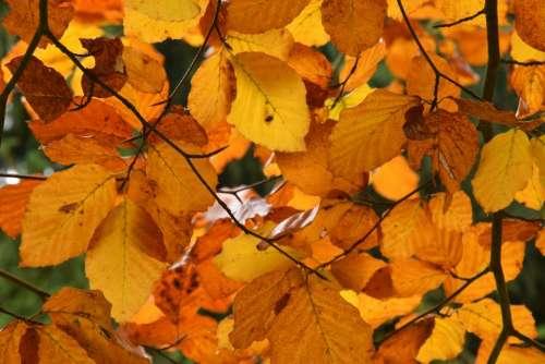 autum leaves leaf foliage color