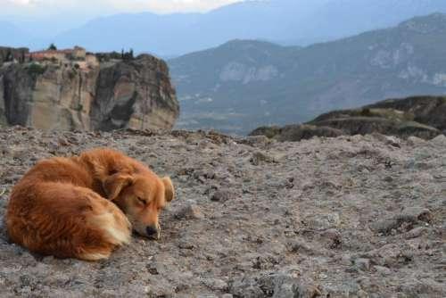 dog stray sleeping outdoors cute