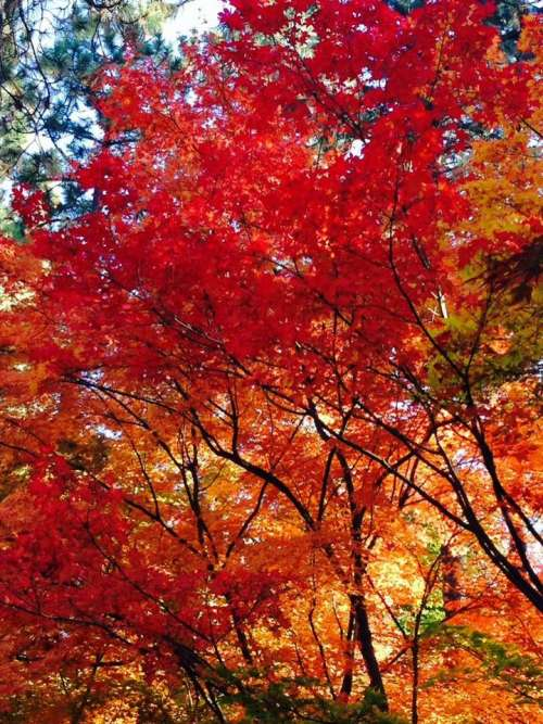 Autumn foliage trees