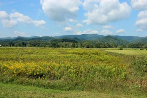 landscape West Virginia mountains goldenrod meadow