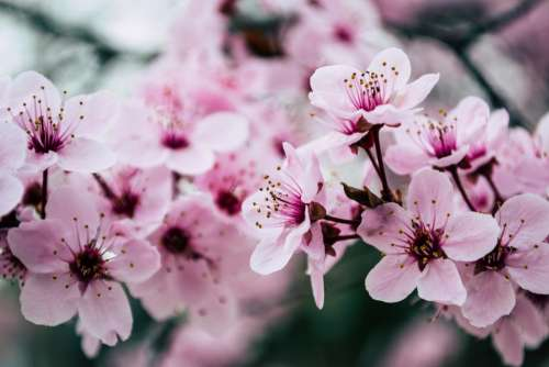flowers flower laurel shrub garden