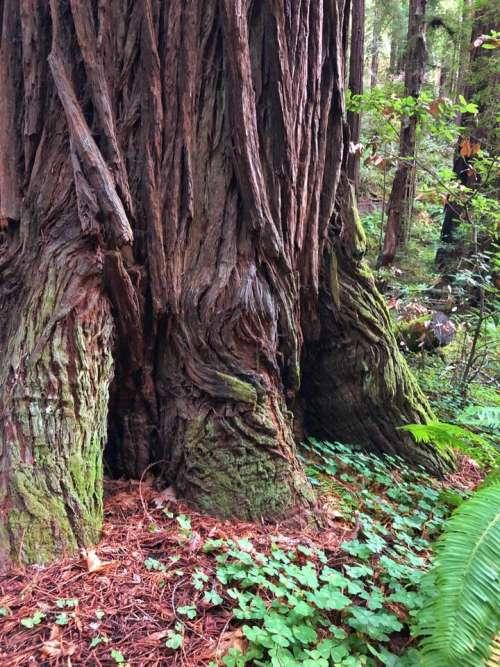 Tree roots tree nature woods wood