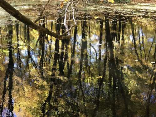 swamp puddle water reflection trees