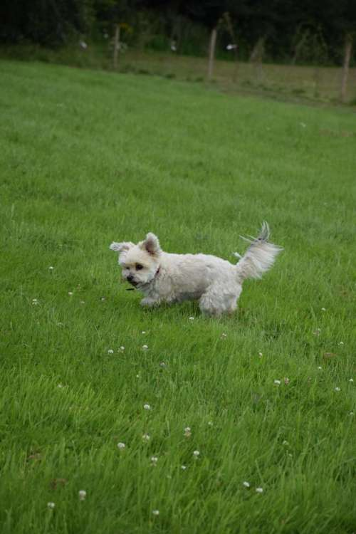 dog doggy little dog sweet puppy