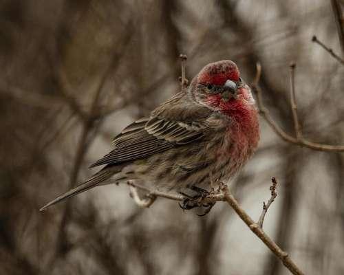 #littlebirdies songbird finch nature wildlife