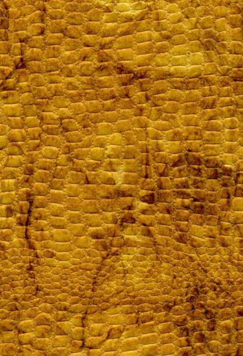 snakeskin yellow gold rough bumpy