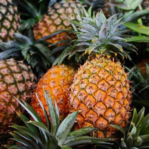 Pineapple pineapples fruit food