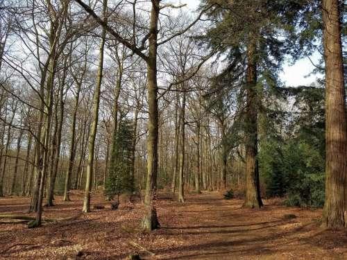 woods walk path winter brown
