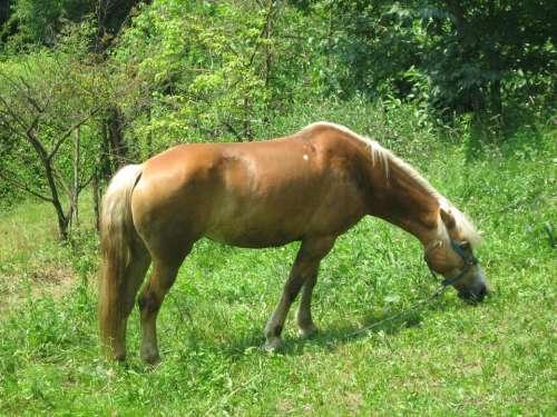 horse animal grass #animals