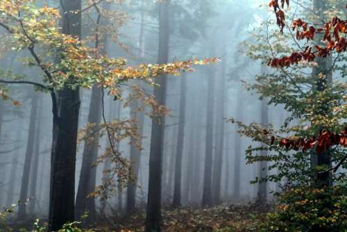 palette colorful forest fog trees