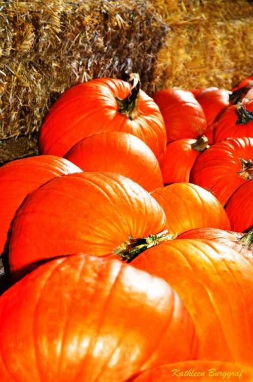 Pumpkin pumpkins Autumn