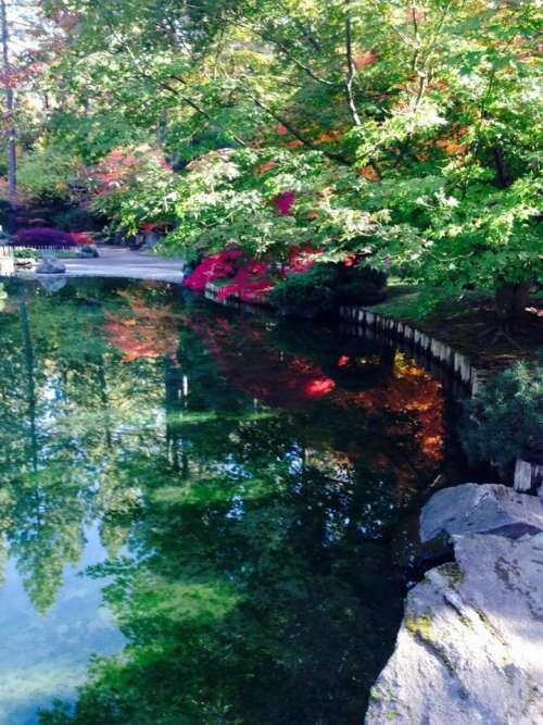 pond landscaping zen garden garden yard