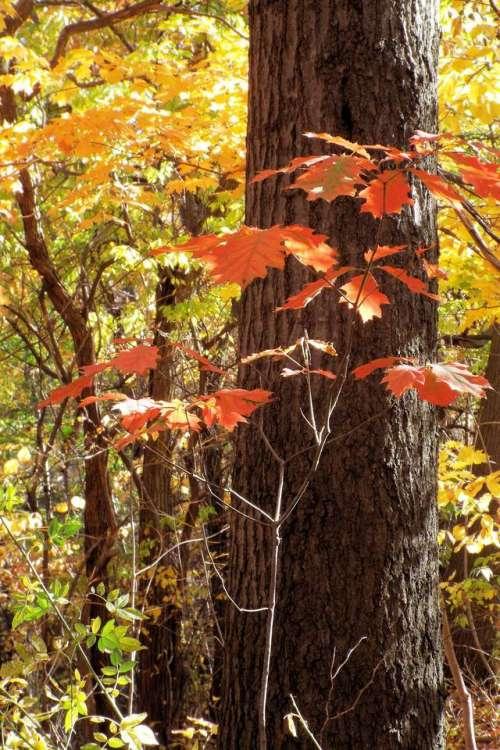 Tree trees Autumn leaves