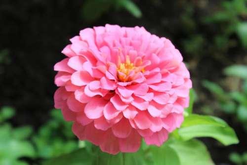 #nature #flower