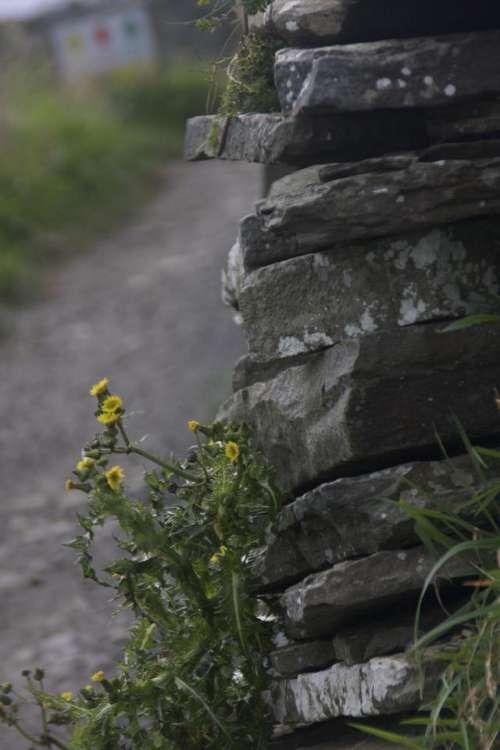 Yellow Flowers Stone Fence Ireland Irish Celtic