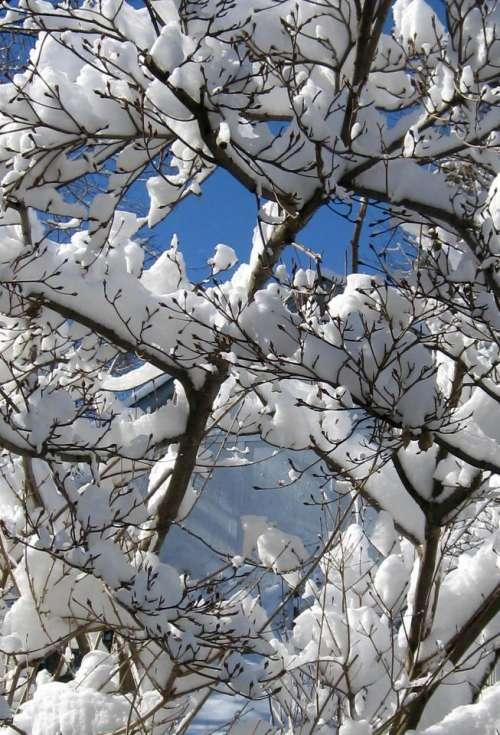 Winter Snow Sky Tree