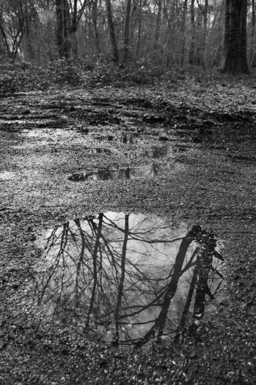 forest reflection water puddle tree