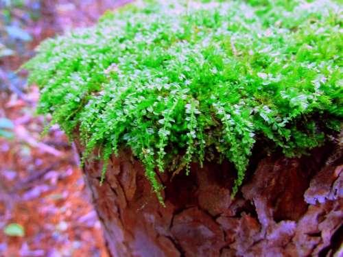 #mossy-texture moss garden