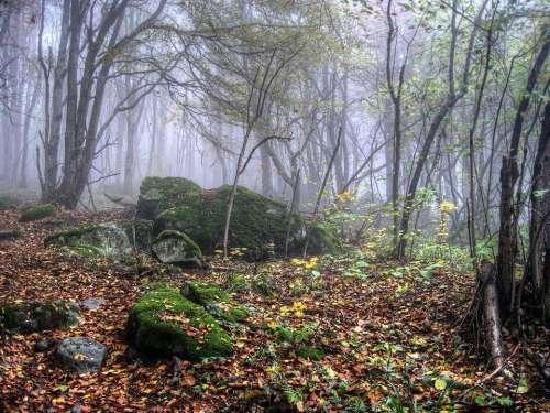 autumn nature forest trees stones