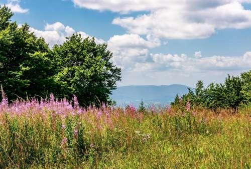 mountain hill landscape meadow flower