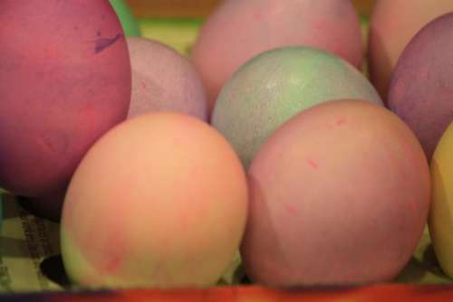 Easter Eggs hard boiled poultry chicken colored