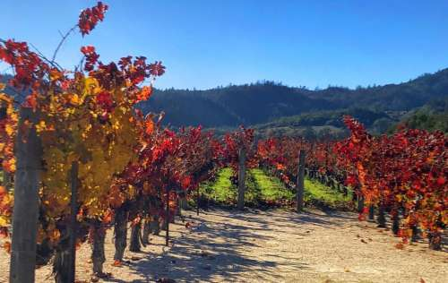 Winery vineyard agriculture farm crops