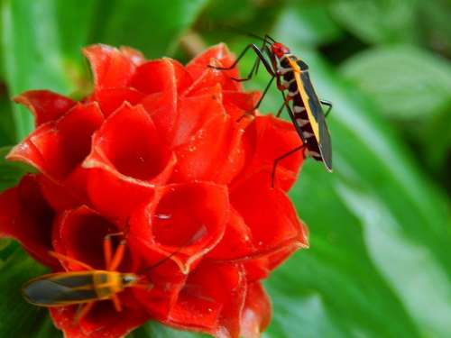 beatle bug insect red flower tropical