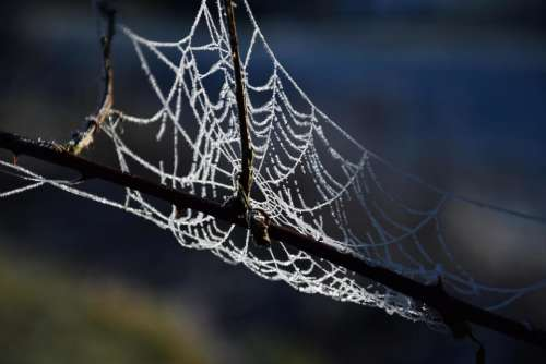 frozen frost cobwebs icy winter