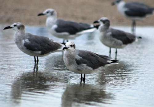 beach ocean seagulls birds coast