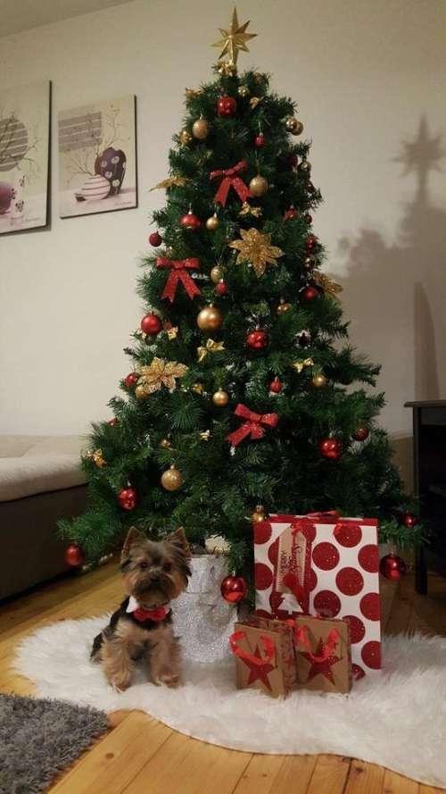christmas holiday tree gifts