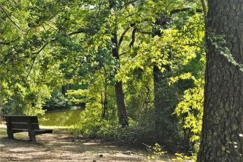 Bench Lake Water Tree Path