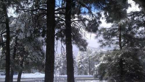 ponderosa Flagstaff snowfall snow pines