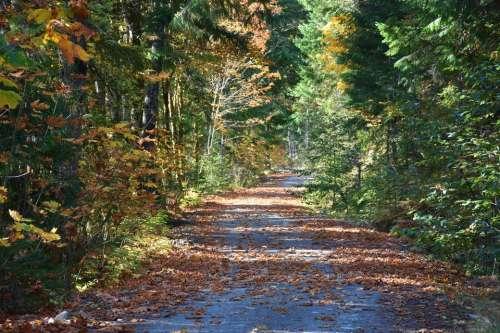 Autumn Fall Logging road