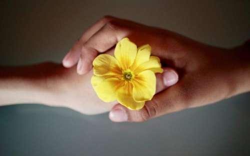 Hands relationship flower