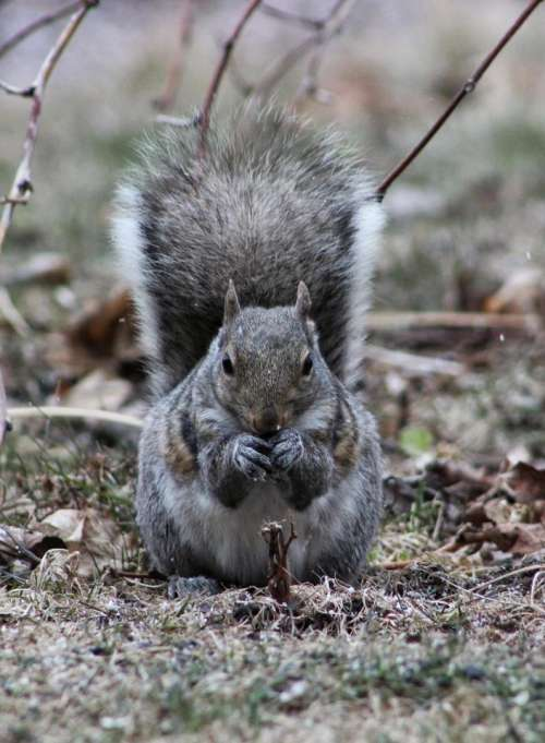 animal rodent squirrel eating planning