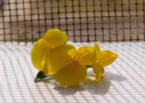 Orchids flower floral