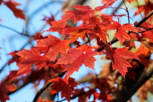 plants trees leaves leaf autumn