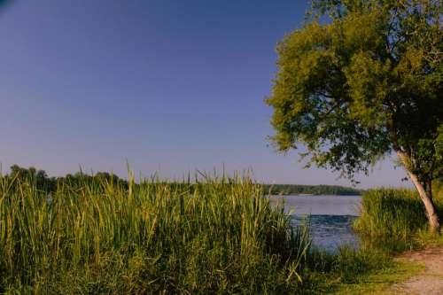 Lake Water Tree Path Green