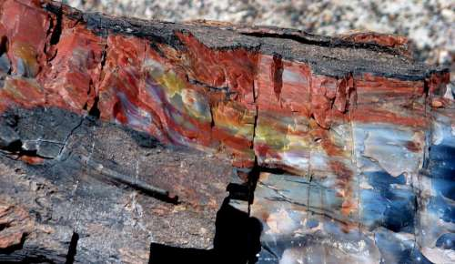 petrified wood red blue rock stone