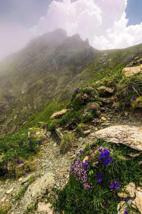 flower rocky slope beautiful hillside