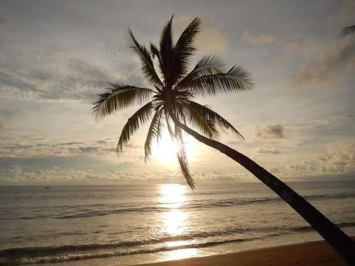 sunset view ocean view palm palm tree