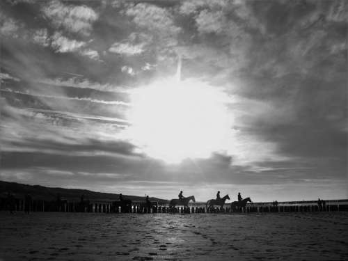 beach horse horses horesebackriding sunset