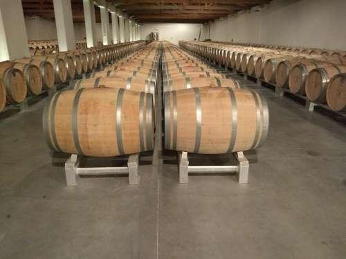 Wine barrels burgundy wood cellar france