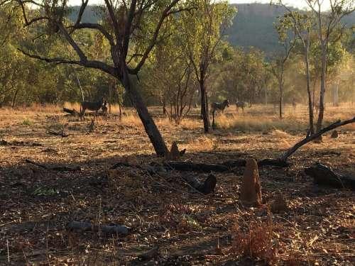 nature bush donkeys outback wild donkeys