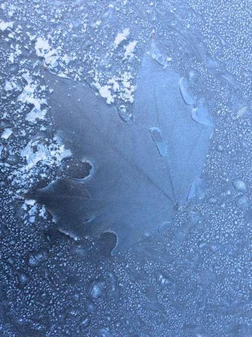 Frost leaf imprint windscreen winter