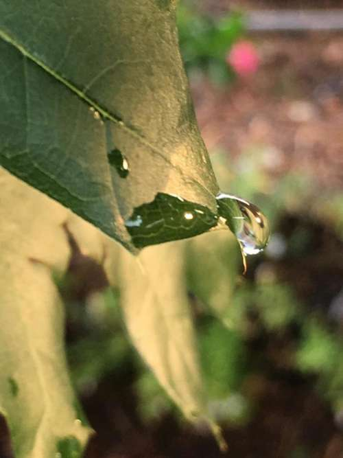 leaf droplet reflection