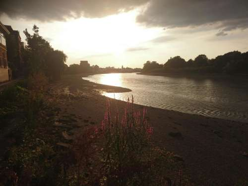 Barnes Thames river sunset flowers