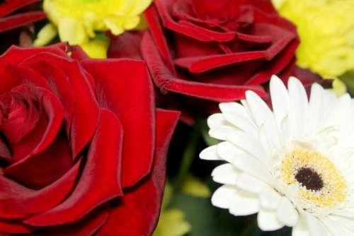 flowers roses chrysanthemum bouquet composition